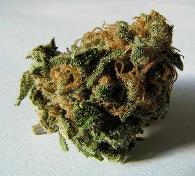 Macro_cannabis_bud